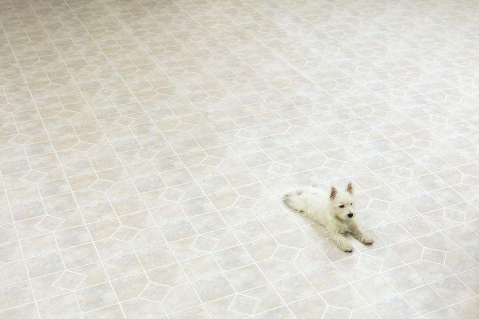 146 How to Clean Linoleum Floors
